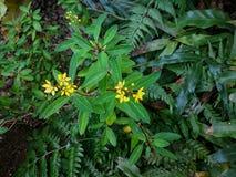 Laef de la flor de Yello en el jardín imagenes de archivo