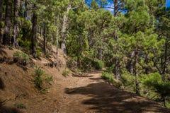 LaEsperanza skog som fotvandrar rutten Royaltyfria Foton