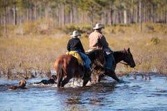 Cowboy herds his cattle through marshland Stock Photos