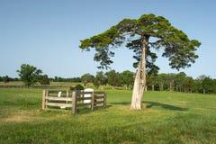Lafayette mortifie la tombe - parc historique national de palais de justice d'Appomattox Images stock