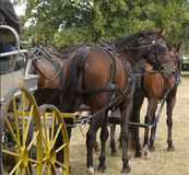 lag för fyra häst Royaltyfria Bilder