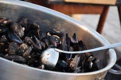Laga mat för musslor Royaltyfri Fotografi