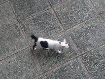Laga mat med grädde katten Royaltyfri Foto
