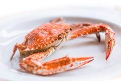 Lagad mat blå krabba på isolerad vit Royaltyfria Foton