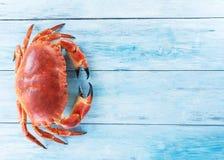 Lagad mat brun krabba eller ätlig krabba royaltyfria foton