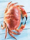 Lagad mat brun krabba eller ätlig krabba på den blåa träfliken royaltyfri bild