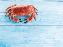 Lagad mat brun krabba eller ätlig krabba som isoleras på den blåa träfliken arkivbilder