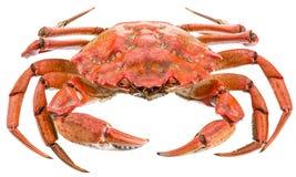 Lagad mat krabba Arkivfoto
