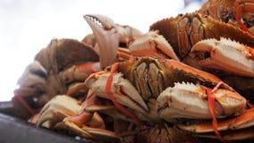 Lagade mat Dungeness krabbor arkivfilmer