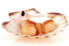 Lagade mat helgonJacques skal royaltyfri foto