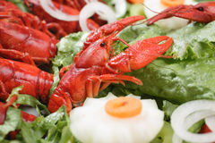 lagade mat hummer Royaltyfri Foto