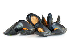 Lagade mat musslor Royaltyfria Foton
