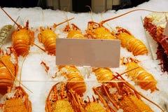 Lagade mat västra Australien vaggar hummerskärm med den vita etiketten royaltyfri fotografi
