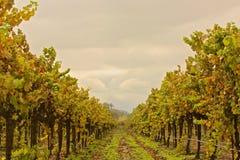 Lagar de Opolo de los viñedos Imagenes de archivo