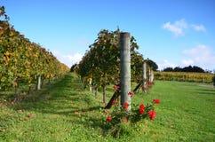Lagar Soljans del estado de los viñedos auckland En alguna parte en Nueva Zelandia Fotografía de archivo libre de regalías