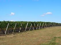 Lagares y viñedos de Long Island foto de archivo