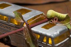 Lagarta de Hornworm do tomate com ônibus do brinquedo Imagens de Stock Royalty Free