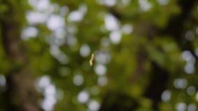 Lagarta fresca do plano que rasteja na Web acima Uma vista estranha Criação fresca da natureza vídeos de arquivo