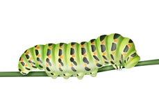 Lagarta verde de Machaon ilustração royalty free