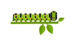 Lagarta verde em uma planta verde Imagens de Stock