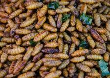 Lagartas dos insetos. Imagem de Stock