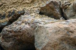 Lagarto colorido areia Fotografia de Stock Royalty Free