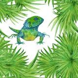 Lagarto da iguana do fundo Teste padrão sem emenda illustrat da aquarela Fotos de Stock