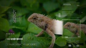 Lagarto de árbol de la animación con tecnología del interfaz del análisis computarizado en la educación de la biología stock de ilustración