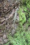 Lagarto de vuelo en un tronco de árbol Fotos de archivo