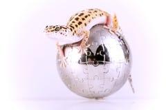 Lagarto del Gecko fotografía de archivo libre de regalías