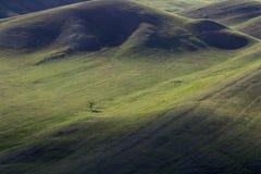 Lagarto el dormir entre las colinas fotografía de archivo libre de regalías