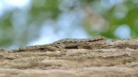 Lagarto en el árbol en selva tropical tropical metrajes