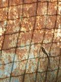 Lagarto en el metal aherrumbrado Imagen de archivo