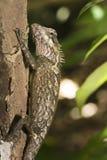 Lagarto en el árbol Foto de archivo libre de regalías