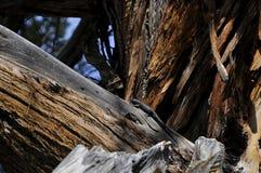 Lagarto en un árbol Imagen de archivo