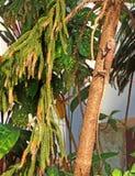 Lagarto en un árbol La India Imagen de archivo libre de regalías