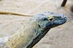Lagarto en un jardín del parque zoológico Fotos de archivo libres de regalías