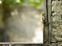 Lagarto en un marco de ventana Imagen de archivo libre de regalías