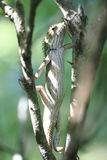 Lagarto na árvore fotografia de stock