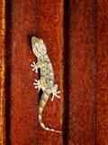 Lagarto na porta oxidada Imagens de Stock