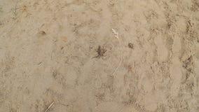 Lagarto que rasteja na areia filme