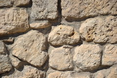 Lagarto só nas pedras Fotos de Stock
