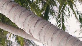 Lagarto tropical que rasteja no tronco de palmeira na ilha tropical Feche acima do lagarto verde na palmeira nas folhas verdes vídeos de arquivo