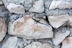 Lagarto verde en la piedra foto de archivo