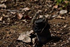 lagartos Foto de Stock
