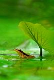 lagd benen på ryggen grodagreen Arkivfoto