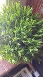 Lagd in liten grön växt Royaltyfri Bild