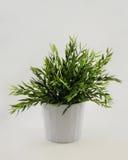 lagd in växt Fotografering för Bildbyråer
