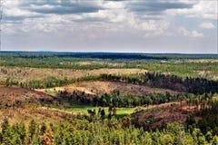 Lage adelvooruitzichten, het Nationale Bos van Apache Sitgreaves, Arizona, Verenigde Staten Stock Afbeelding