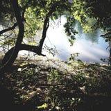 Lage av houton Royaltyfria Bilder
